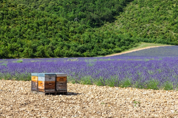 Прованс, юг франции. улей для производства лавандового меда.