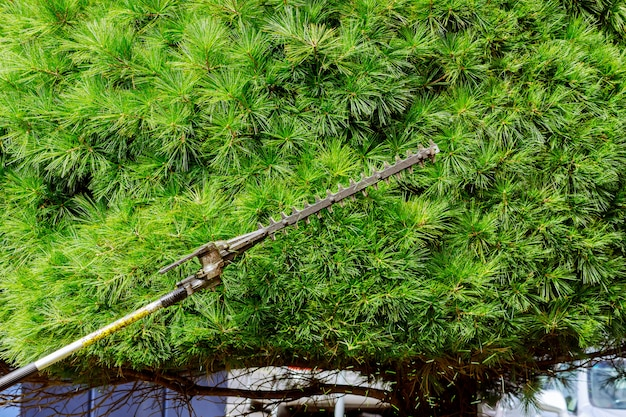 剪定枝は庭で働き、木の枝や茂みを切ります。