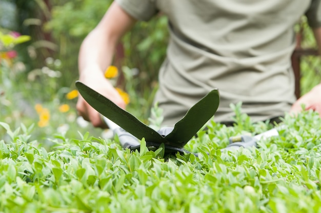 Pruning bushes in the garden with large garden shears