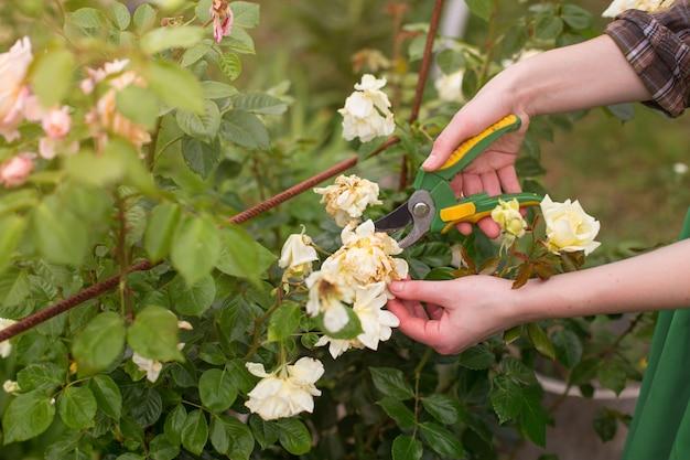 Pruning of garden