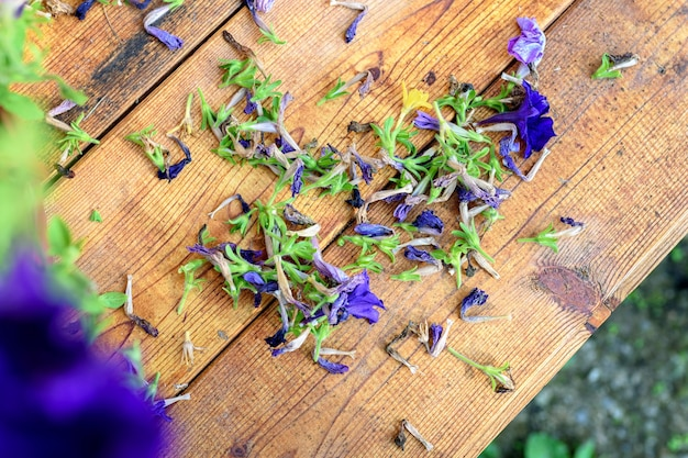 Pruning of old petunia or surfinia flowers a wooden table with dried flowers
