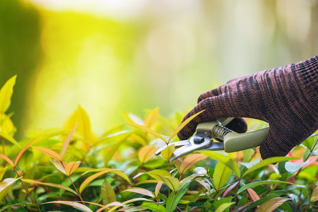 Pruning of ornamental trees at home in morning