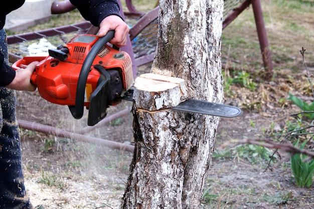 Обрезка ножниц в саду весной