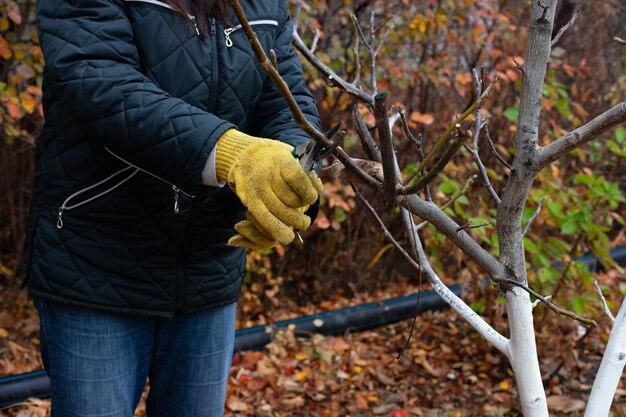 手袋をはめた庭師の季節の背景のクローズアップと剪定ばさみの枝の剪定木...