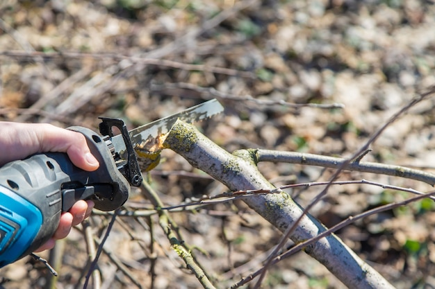 Pruning trees with an electric saw