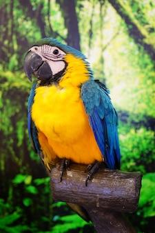 オウム目鳥(psittacidae)とも呼ばれる
