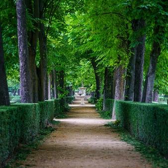 大きな木々と歩くための未舗装の道路がある公共公園