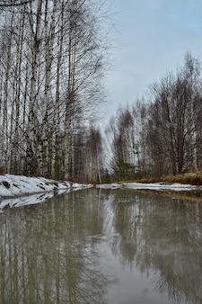 春の森の水たまり