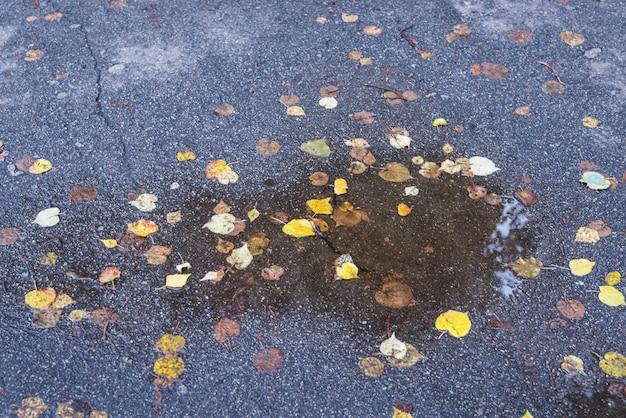 秋のアスファルトに落ち葉の水たまり。秋の雨天。