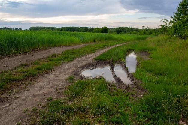Лужа с болотом и водой на дороге возле пшеничного поля.