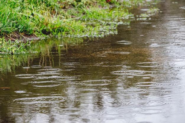 雨の中で木の反射と水たまり。雨の日。雨が降っています、雨天です
