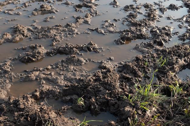 大雨の春と秋の時間の後の未舗装の道路またはトラック上の水たまりと泥と最初の緑の草...