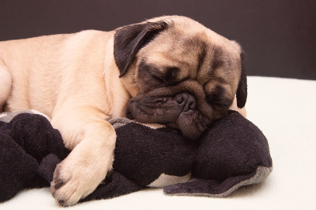 Pug dog sleeping with a plush toy cat on bed