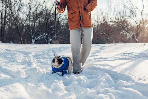 Pug dog walking on snow with man. puppy wearing winter coat