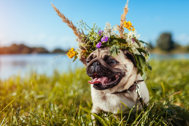 Pug dog wearing flower wreath by river