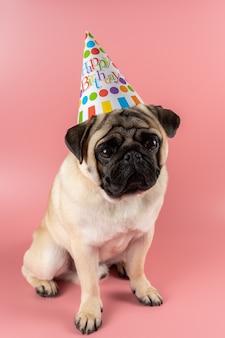 Мопса в шляпе с днем рождения на розовом фоне.