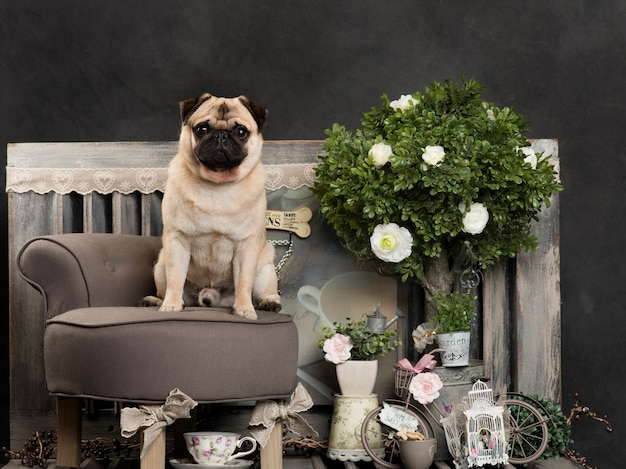 Pug in front of a rustic wall