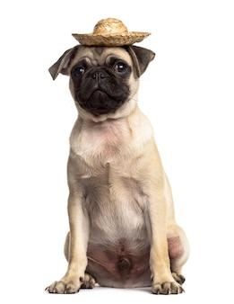 帽子をかぶって座っているパグ、白で隔離