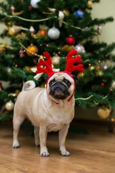 Pug con corna di cervo rosso. cane felice. cane del carlino di natale. atmosfera natalizia. un cane nell'appartamento.
