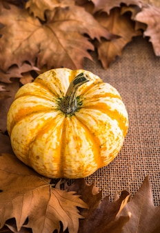 Pumkin with autumn dry leaves