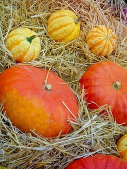 Pumpkin arrangement for sale, autumn still life with pumpkins on wooden