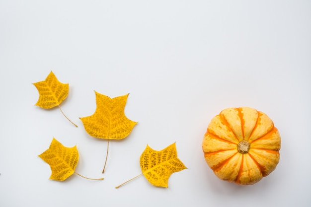 Pumpkin and autumn leaves on white background