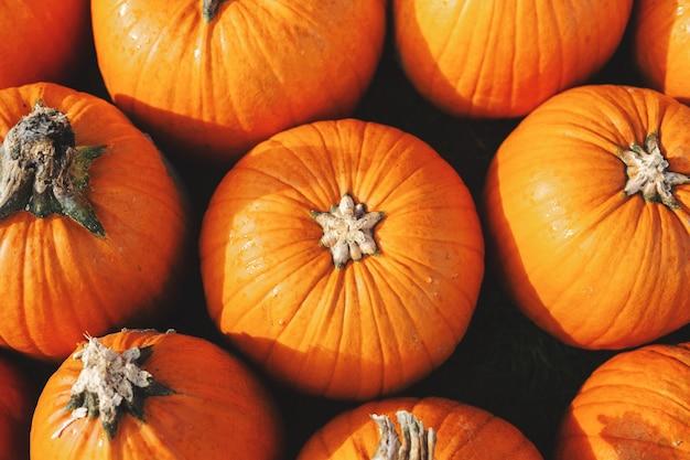 多くのカボチャとカボチャの秋の背景。閉じる