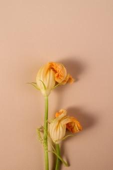 정원에서 잘라낸 호박 꽃은 텍스트를 위한 빈 공간이 있는 꽃무늬 배경입니다