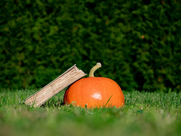 Pumpkin and books on a grass on yard in october