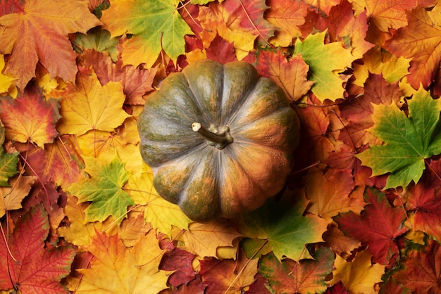 Pumpkin on colorful fallen leaves background. top view. flat lay. copy space for advertising.