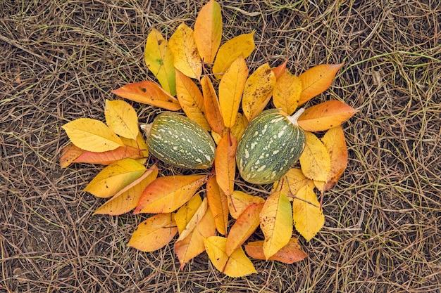 カボチャの収穫、紅葉、収穫