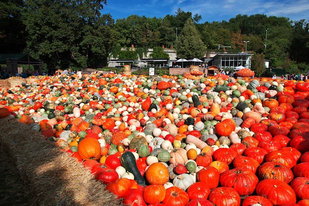 Pumpkin festival in ludwigsburg, germany