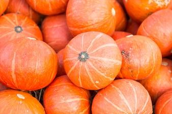 Pumpkin in the park