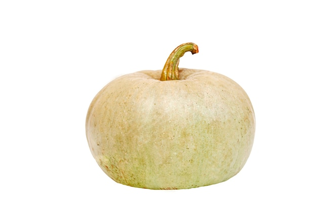Pumpkin isolated on white background