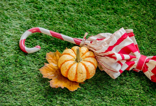 Pumpkin and leaf with umbrella on green lawn