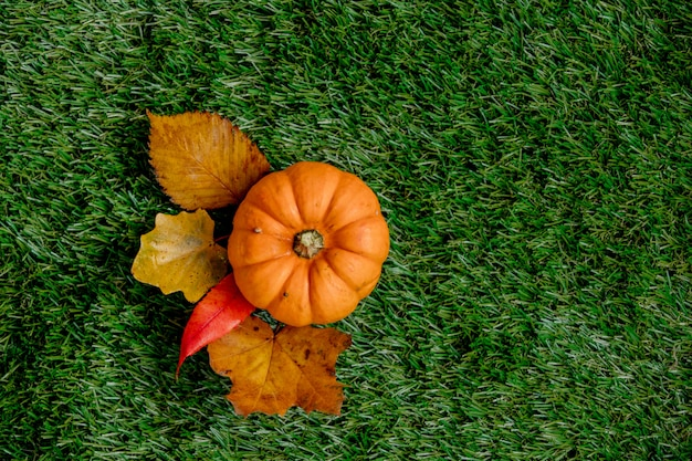 Pumpkin and leaves on green lawn