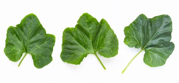 흰색 바탕에 호박 잎