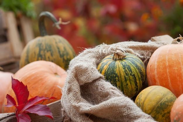 Pumpkin in a  linen bag. autumn nature concept.