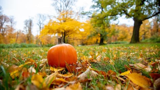 公園の葉と草の上のカボチャ