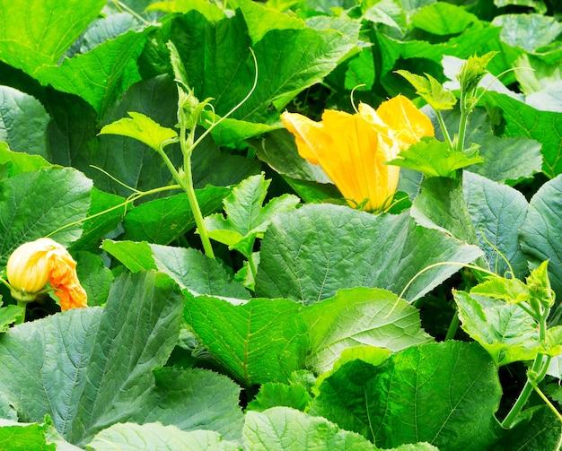 필드에 꽃과 호박 식물입니다.