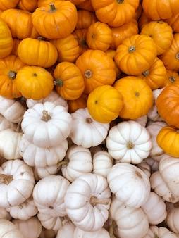 カボチャ、秋の収穫、小さなカボチャ、テクスチャまたは秋の背景。
