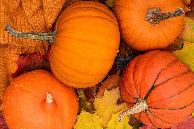 Тыквы, осенние кленовые листья и уютный свитер. апельсиновое настроение. осенний фон, вид сверху.