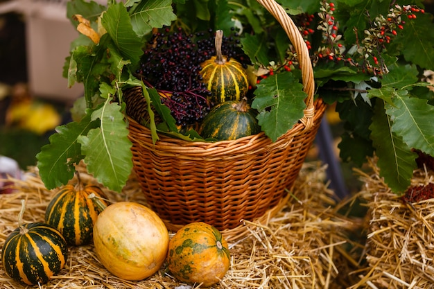 Pumpkins in basket and decorative corns.
