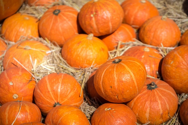 Pumpkins on a bed of straw on farm field.