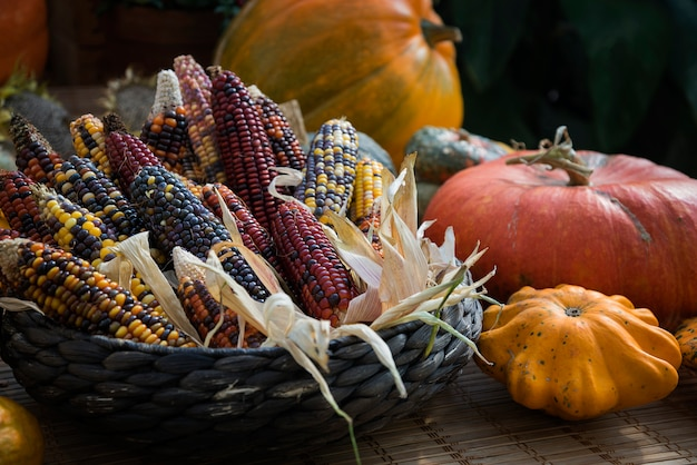 Pumpkins and corncobs with colorful seeds in the straw basket