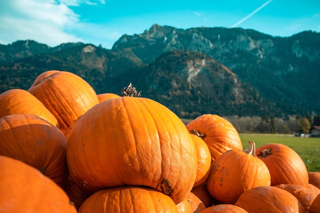 Pumpkins of different sizes stacked on top of each other behind a mountain