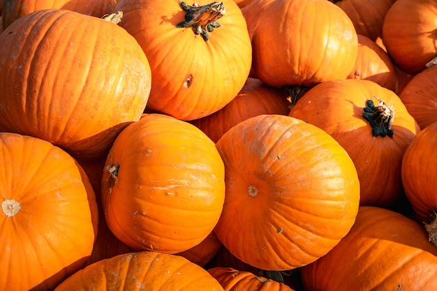 Pumpkins of different sizes stacked on top of each other