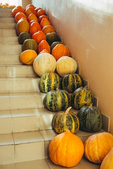 Pumpkins on stairs halloween concept