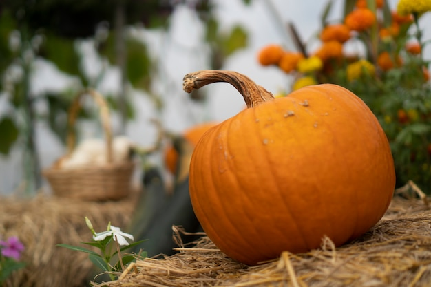 Pumpkins that are cultivated in modern houses industrial agriculture system