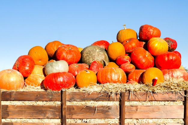 Pumpkins with different colours on a farmer's market. organic farm.